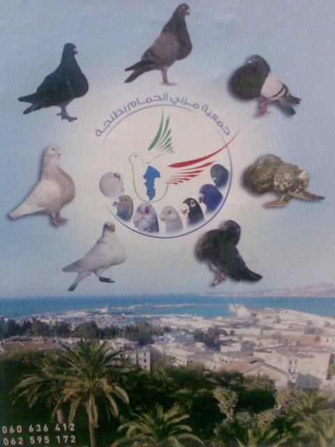 La création de l'association des pigeons de fantaisie à Tanger Photo010