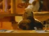 7 exercices de corde a sauter Marmot10