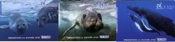 THONON : les animaux marins du film Oceans