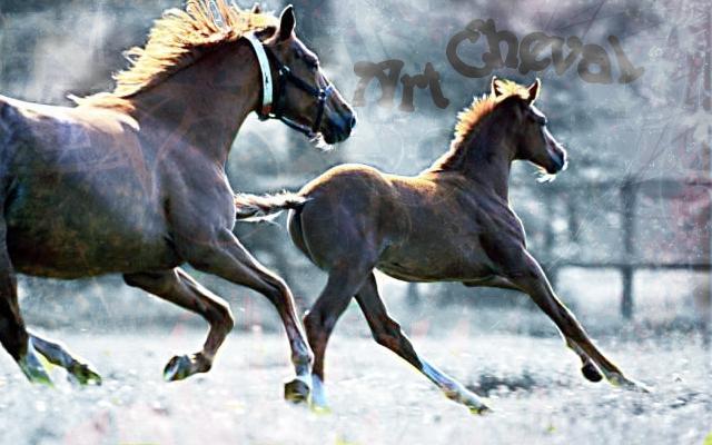 Passion du cheval et de la création artistique