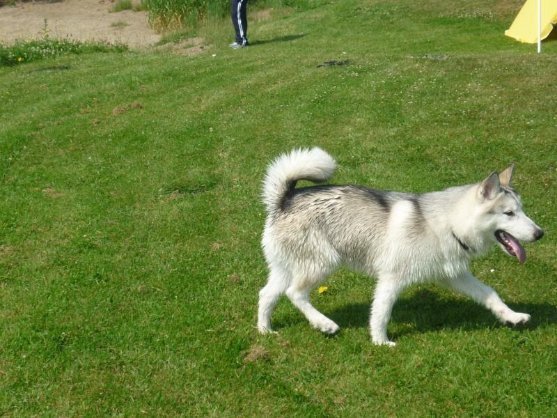 Nos loups grandissent, postez nous vos photos - Page 5 26-06-10