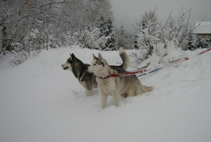 Baltik et Angie en vacances à BRAMANS (savoie) Janvier 2010 Img_5819