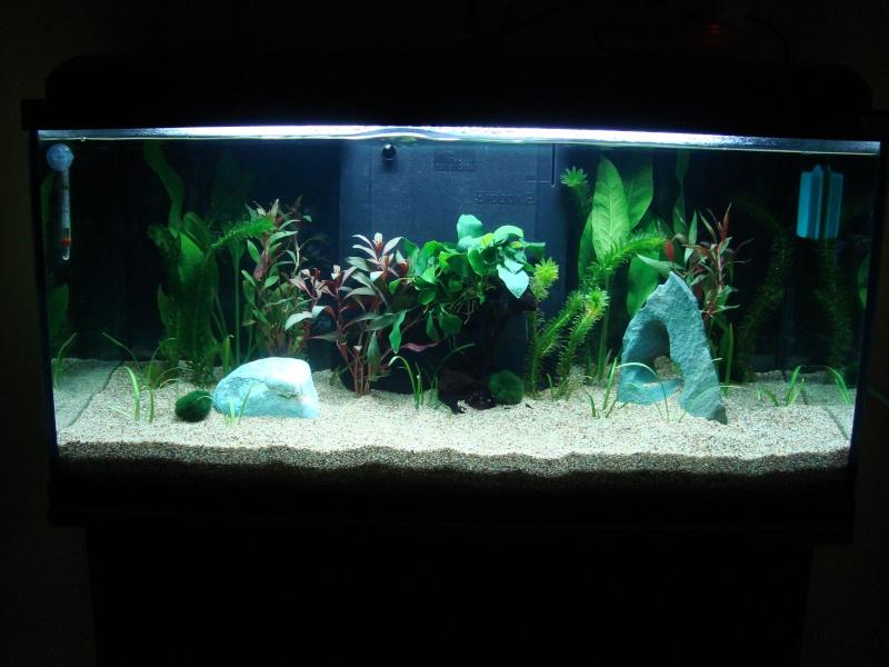 Mon aquarium à moi !!! Charli11