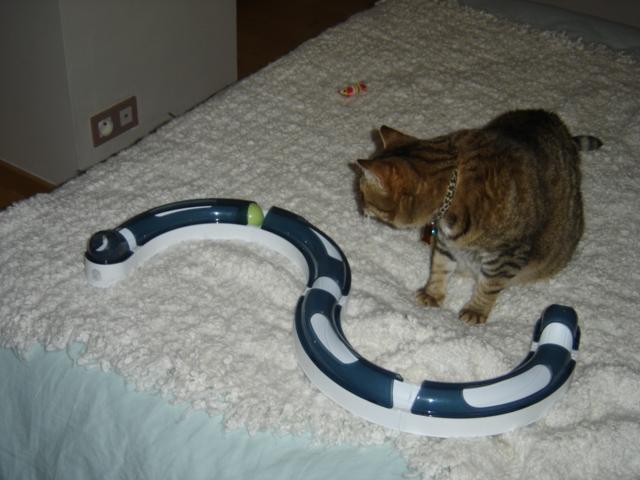 Les jouets pour chats Joujou11