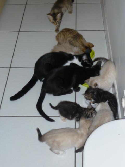 La face cachée de l'Ecole du chat de Quiberon P1050510