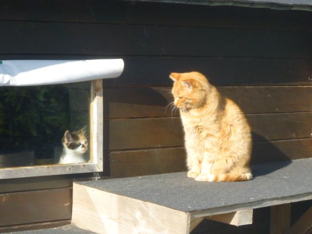 La face cachée de l'Ecole du chat de Quiberon P1050910