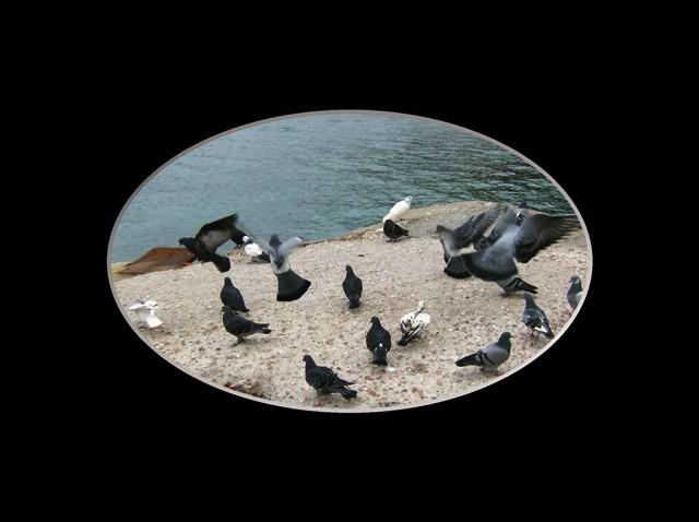Αδέρφια μου αλήτες πουλιάααααααααα!!! Iiiiii80