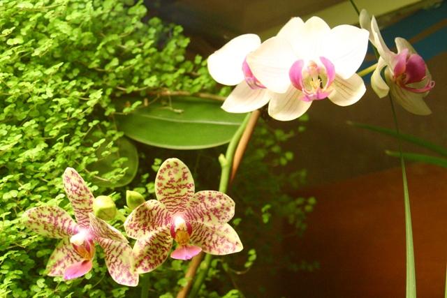 """Mon orchidérarium """"Par Francis"""" - Page 2 Orchid10"""