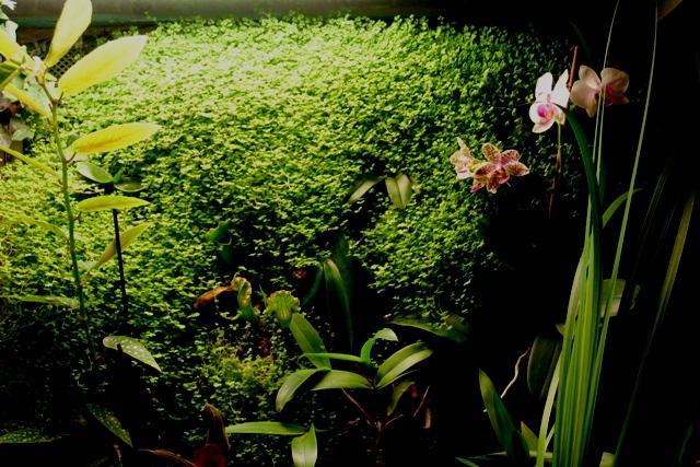 """Mon orchidérarium """"Par Francis"""" - Page 2 Orchid18"""