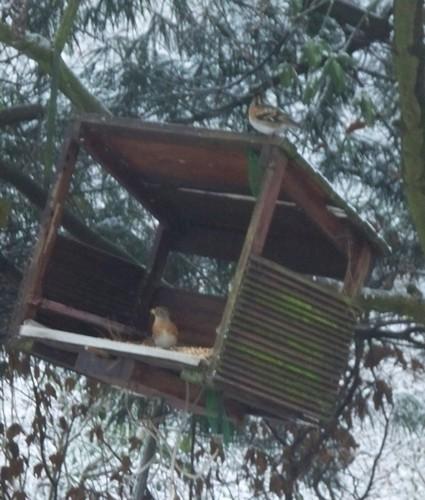 Reconnaitre les oiseaux de nos jardins... - Page 3 Gros_b10