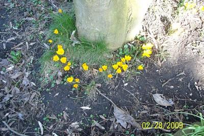 premice du printemps.... - Page 6 Premie10