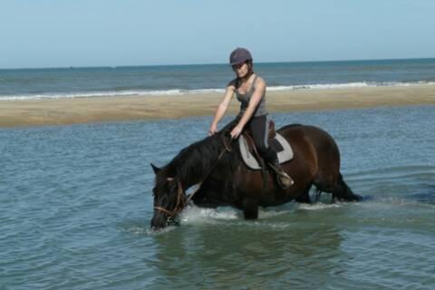 """Résultat de recherche d'images pour """"cheval dans l'eau"""""""""""