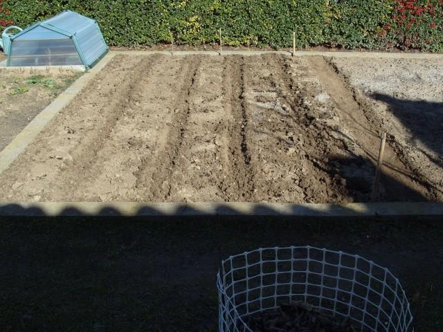 nouvelles plantations de légumes - Page 2 S1050345