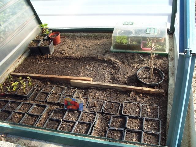 nouvelles plantations de légumes - Page 2 S1050346