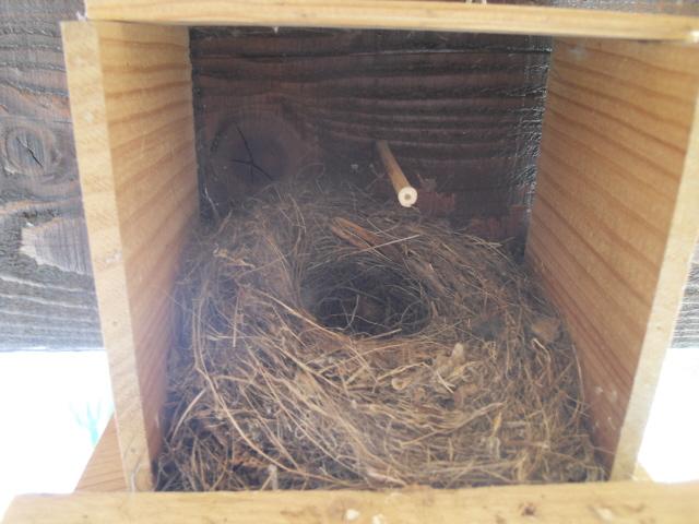 Hôtel de l'oiseau - Page 3 Sdc10018