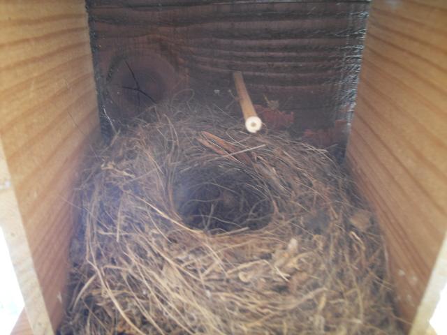 Hôtel de l'oiseau - Page 4 Sdc10026