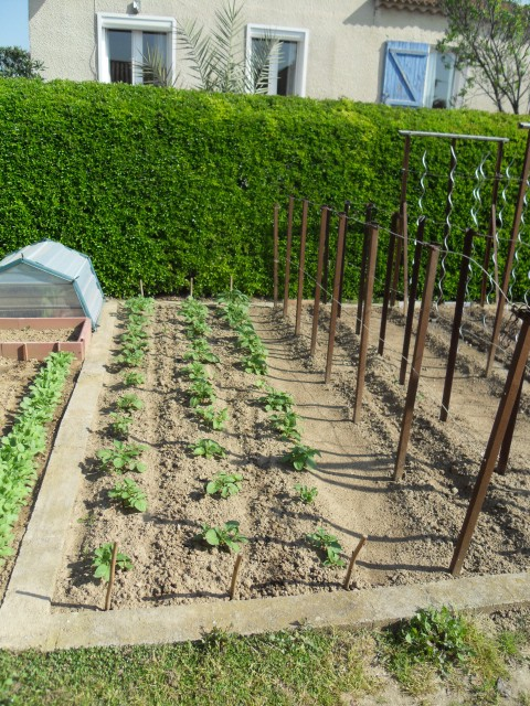 nouvelles plantations de légumes - Page 3 Sdc10111