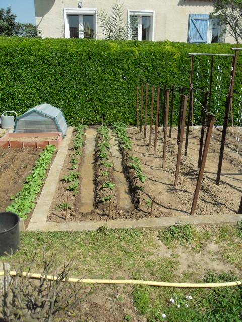 nouvelles plantations de légumes - Page 3 Sdc10113
