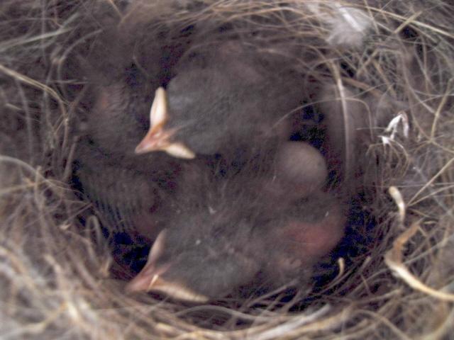 Hôtel de l'oiseau - Page 4 Sdc10136