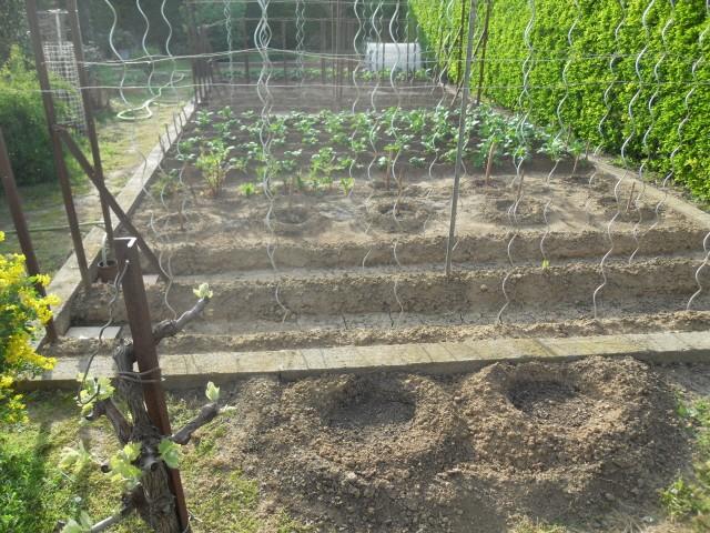 nouvelles plantations de légumes - Page 3 Sdc10211
