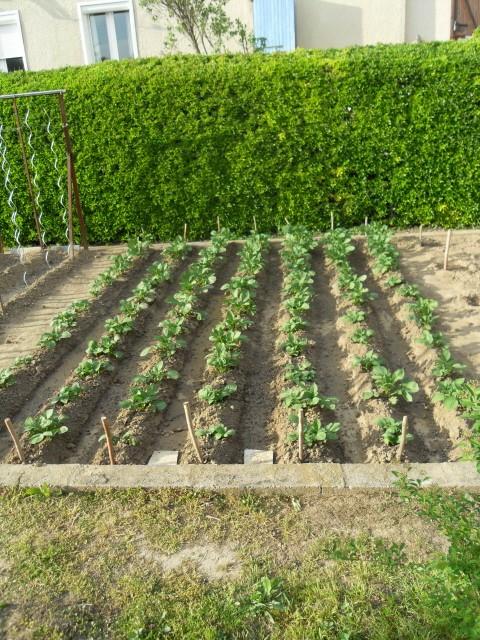 nouvelles plantations de légumes - Page 3 Sdc10212
