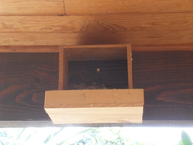 Hôtel de l'oiseau - Page 3 Sdc10215