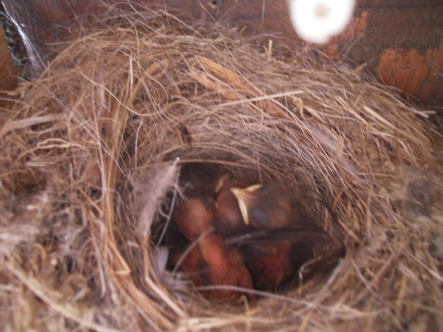 Hôtel de l'oiseau - Page 3 Sdc10321