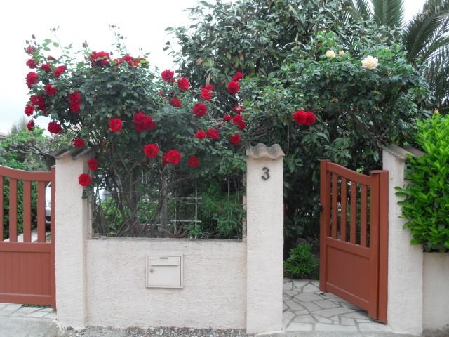 Petit album de roses - Page 4 Sdc10323