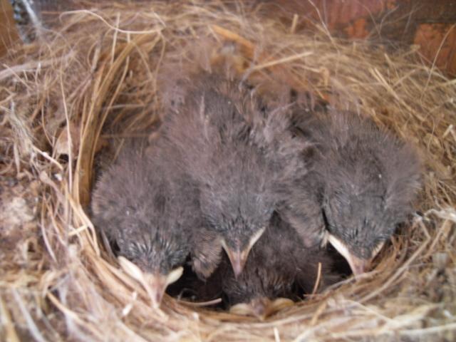 Hôtel de l'oiseau - Page 3 Sdc10342