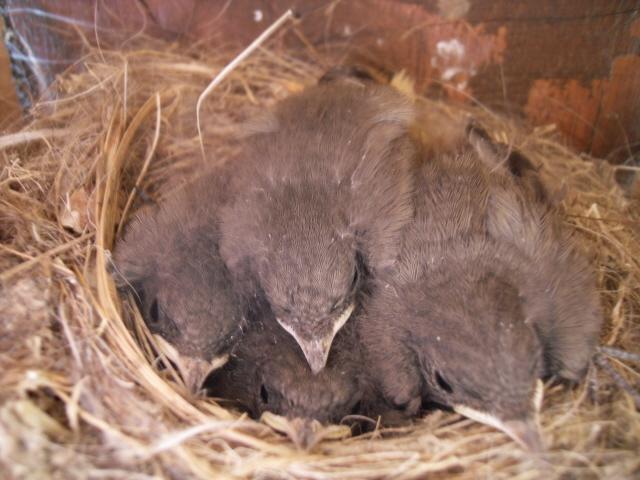 Hôtel de l'oiseau - Page 3 Sdc10411
