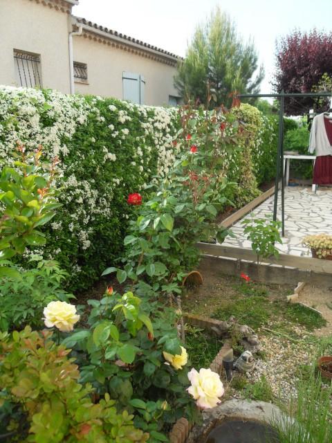 Petit album de roses - Page 4 Sdc10438