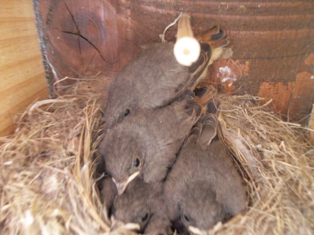Hôtel de l'oiseau - Page 4 Sdc10442