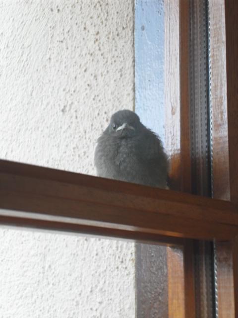 Hôtel de l'oiseau - Page 4 Sdc10515