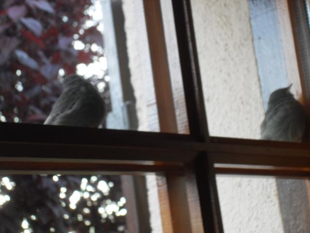 Hôtel de l'oiseau - Page 4 Sdc10516