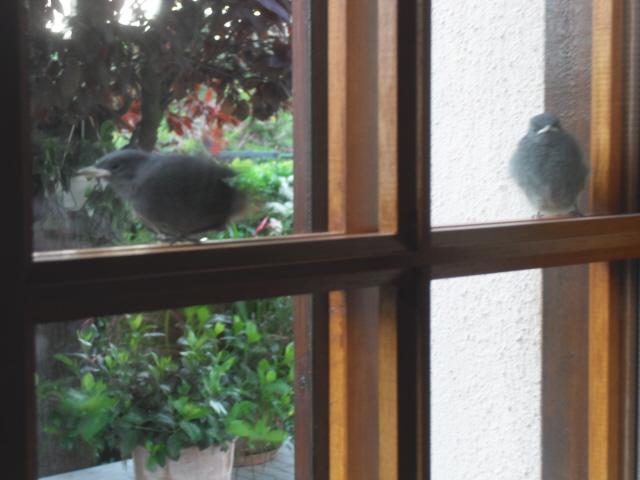 Hôtel de l'oiseau - Page 4 Sdc10517