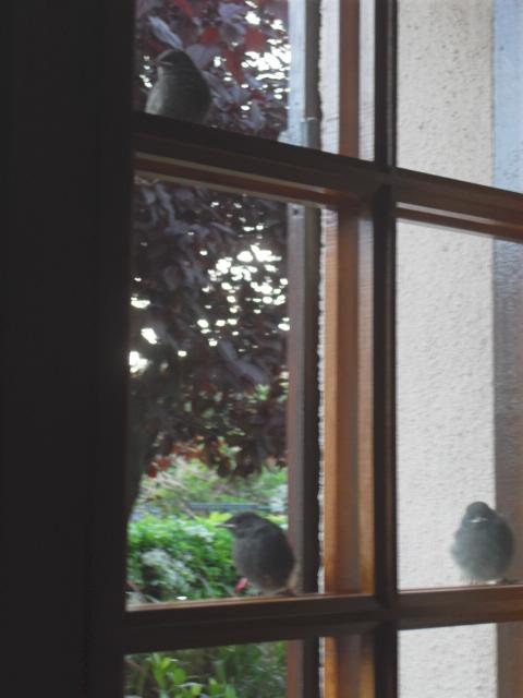 Hôtel de l'oiseau - Page 4 Sdc10518