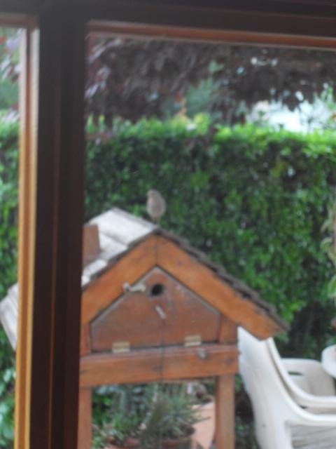 Hôtel de l'oiseau - Page 4 Sdc10519