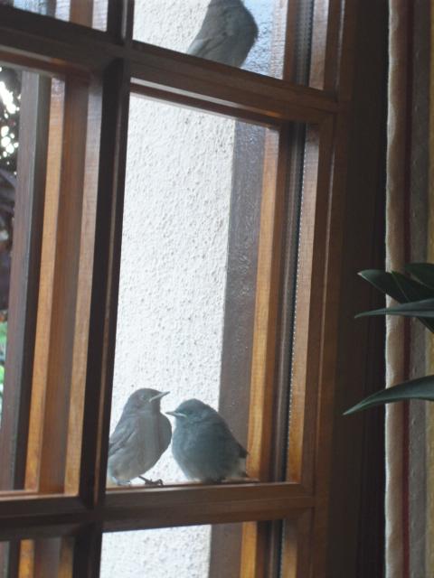 Hôtel de l'oiseau - Page 4 Sdc10520