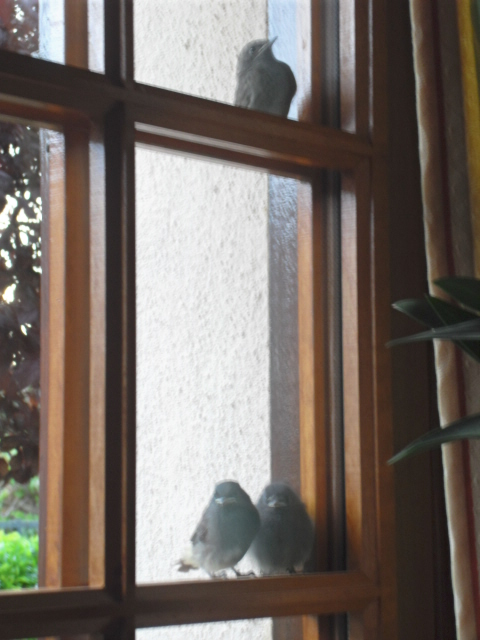 Hôtel de l'oiseau - Page 4 Sdc10522