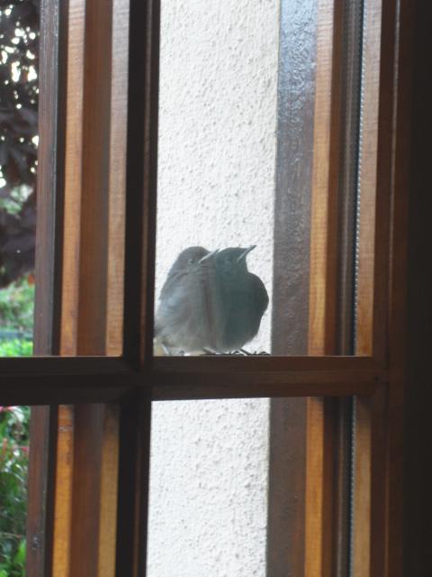 Hôtel de l'oiseau - Page 4 Sdc10523