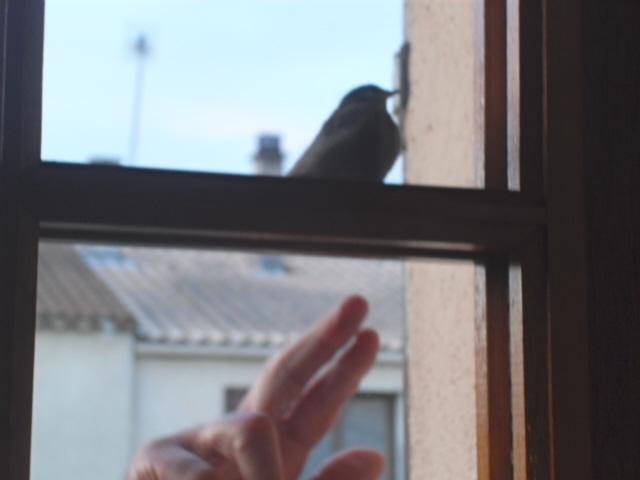 Hôtel de l'oiseau - Page 4 Sdc10525