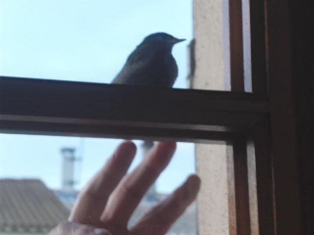 Hôtel de l'oiseau - Page 4 Sdc10527