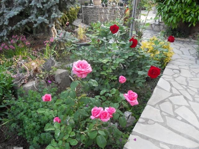 Petit album de roses - Page 4 Sdc10536
