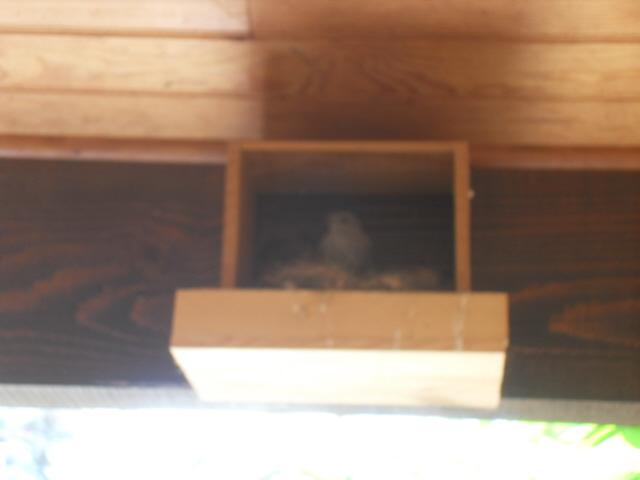 Hôtel de l'oiseau - Page 4 Sdc10611