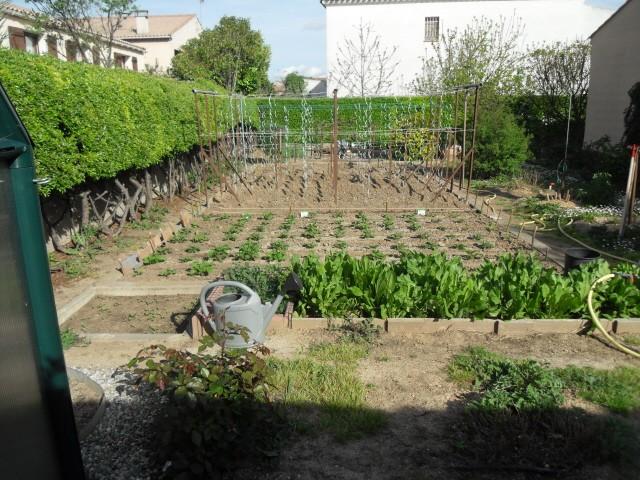 nouvelles plantations de légumes - Page 4 Sdc10625