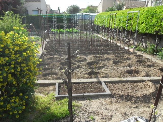 nouvelles plantations de légumes - Page 4 Sdc10626