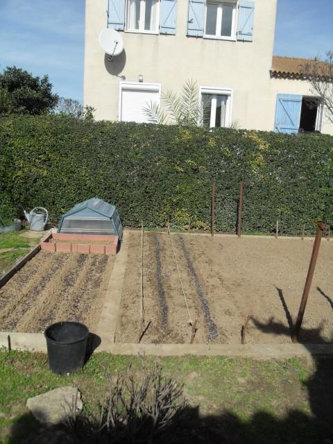 nouvelles plantations de légumes - Page 3 Sdc11032