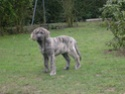 trombinoscope......de nos chiens Hiver_11