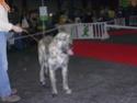 trombinoscope......de nos chiens Photos12