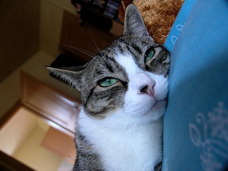 Mon chat Astro le beau 211